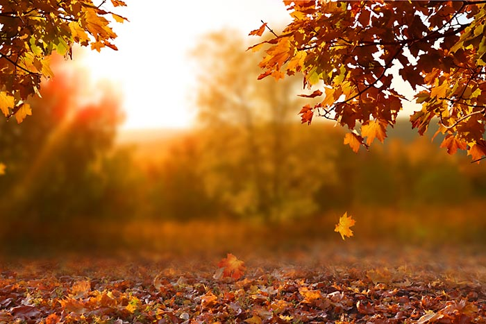 Fall Cleanup Spring Cleanup Yard Services