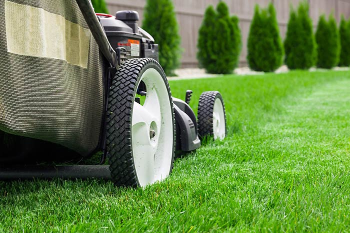 Professional Lawn Maintenance and Lawn Care