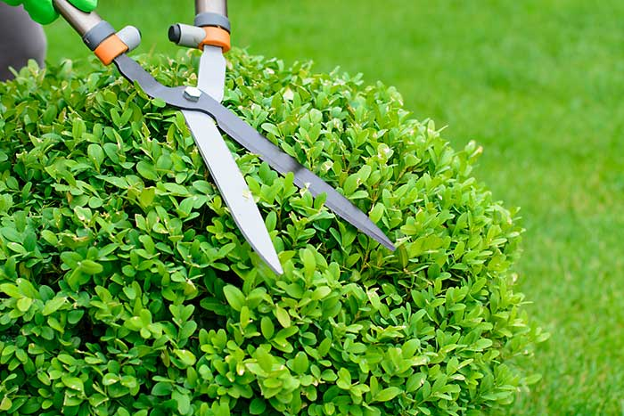 Professional Bush Trimming Lawn Services