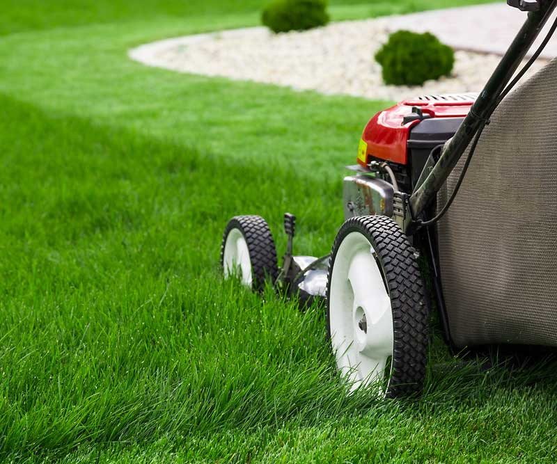 Tips to Achieve a Healthy Lawn